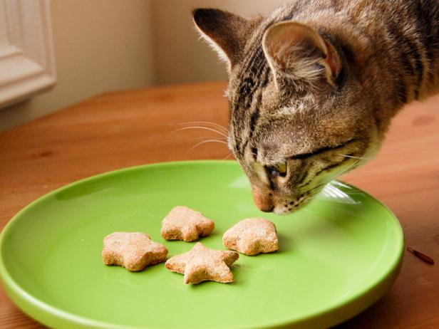 CI-AmyBites_Cat-Sniffing-Treats_s4x3.jpg.rend.hgtvcom.616.462.jpeg
